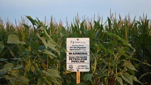 Une affiche de Transcanada dans un champ de maïs