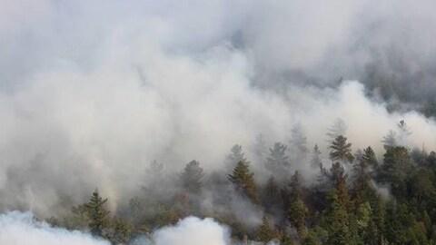Une fumée intense émane d'une forêt