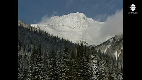 Forêt de conifères et montagne enneigée à l'arrière-plan