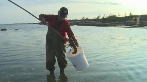 Le homard est tenu par le crochet au bout du bâton du pêcheur.