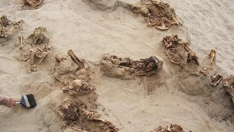 Des squelettes sur du sable.