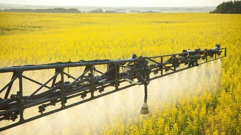 Épandage de pesticide sur un champs de canola.