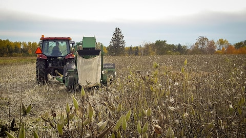 Un tracteur procède à la récolte sur soyer du Québec dans un champ.