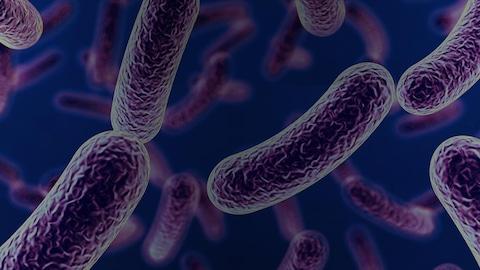 Plusieurs bactéries deviennent résistantes aux antibiotiques. Si rien n'est fait, des infections banales ne pourront plus être soignées et elles redeviendront la première cause de mortalité dans le monde.