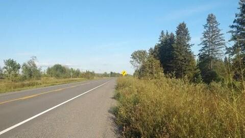 Une route bordée d'herbe longue.