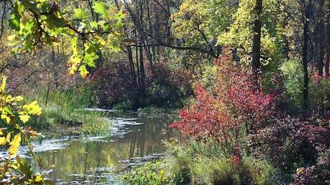 Scène d'automne sur la rivière Seine.
