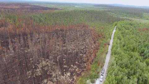 Vue aérienne d'une forêt ravagée par le feu.