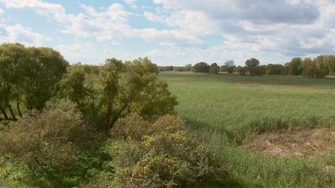 Une ancienne terre agricole en friche dans un parc national.