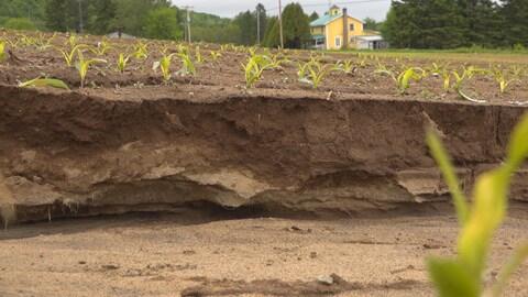 Un fossé creusé par l'érosion dans un champs de maïs. On peut voir les strates de terre de différentes couleurs.
