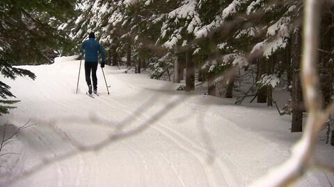 Un skieur dans un sentier de ski de fond