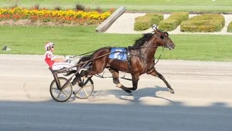 Un cheval lors d'une course attelée
