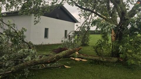 Une branche d'arbre arrachée par des vents violents repose par terre.