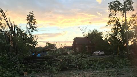De nombreux arbres déracinés devant une maison.