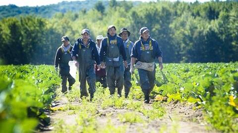 Des travailleurs étrangers dans un champ.