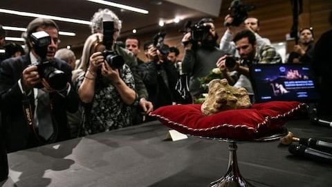 Une truffe blanche, déposée sur un coussin rouge, est mitraillée par les photographes.