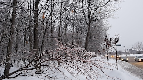 Des branches d'arbres qui menacent de céder sous le poids du verglas.