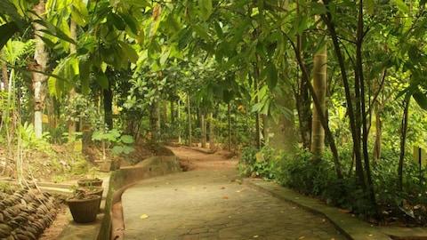 Un jardin botanique au Sri Lanka