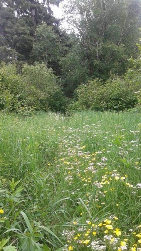Un sentier envahie d'herbes hautes et de mauvaises herbes