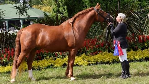 Le cheval patrimonial: un potentiel sportif qui se révèle
