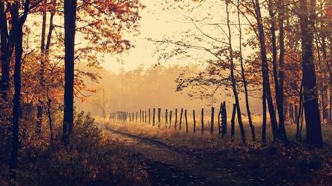 Chemin traversant un champ aux couleurs de l'automne.