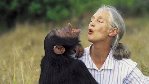 La primatologue et anthropologue britannique Jane Goodall