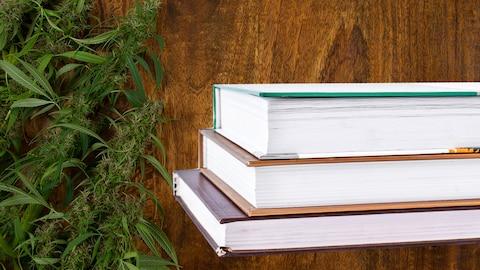 Des livres et des plants de cannabis.
