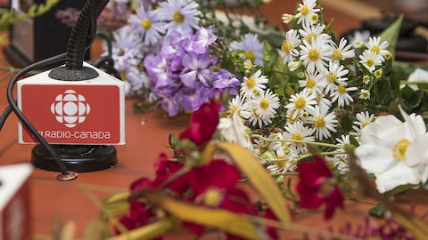 Le phlox, l'aster Starshine, le rosier flower carpet rouge et l'anémone japonaise Honorine Jobert.