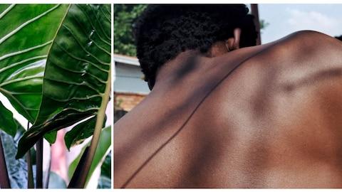 Le dos d'un homme noir est photographié côte-à-côte avec l'image d'une plante tropicale.