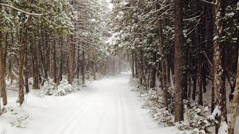 Des pistes de ski de fond parallèles dans la forêt
