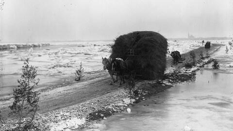 Photo en noir et blanc montrant une charrette remplie de foin tirée par deux chevaux sur un petit chemin entouré d'eau et de glace.