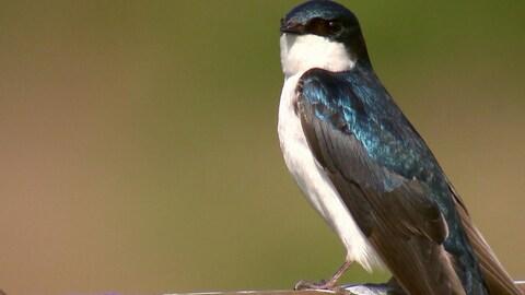 Un oiseau avec des ailes bleues.