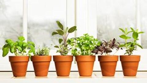 Dix pots contenant des plantes sont déposés près d'une fenêtre lumineuse.