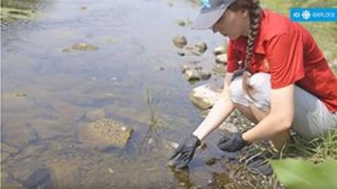 Une employée du Zoo de Granby relâche les bébés tortues molles à épines dans une rivière.