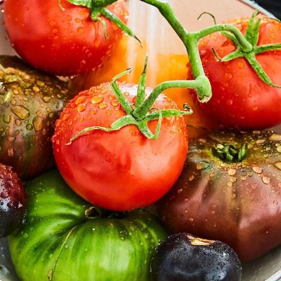 Plusieurs tomates de diverses couleurs dans une passoire qui viennent de se faire laver.