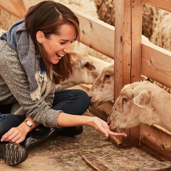 La nutritionniste Geneviève O'Gleman donne à manger à un agneau.