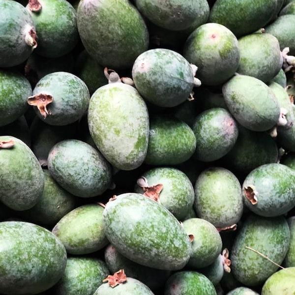 Des feijoas, fruits qui ressemblent à de petites mangues vertes.