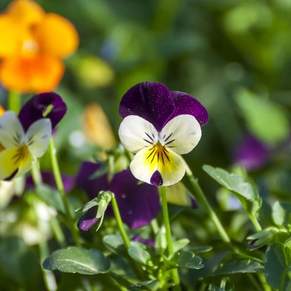 Des fleurs dans un champs.