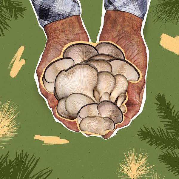 Illustration de mains qui tiennent des champignons sauvages.