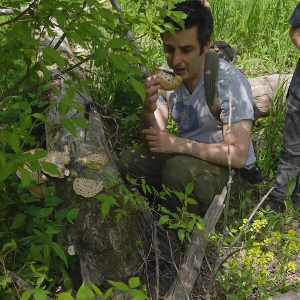 Jonathan Lapierre cueille un champignon sauvage en compagnie de son fils.