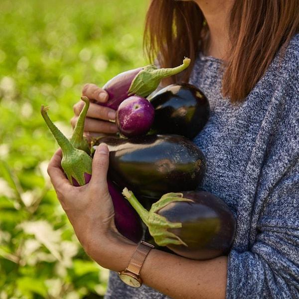 Femme qui tient dans ses mains plusieurs aubergines de différentes tailles.