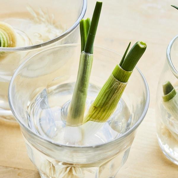 Trois verres d'eau dans lesquels sont placé des bouts d'oignons verts qui repoussent.