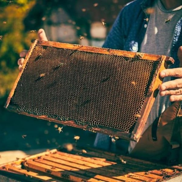 Une personne qui tient un cadre de ruche rempli d'un rayon de miel.