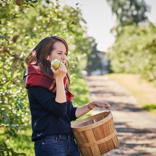 Geneviève est parmi les pommiers et elle tient dans sa main gauche un panier et dans sa main droite une pomme qu'elle est en train de manger.