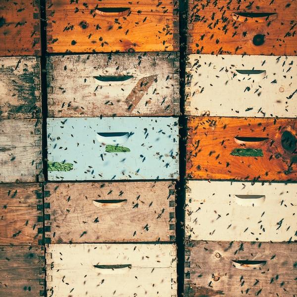 Des ruches colorées envahies par des abeilles.