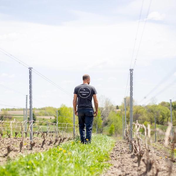 Une personne de dos entre deux rangées de vignes.