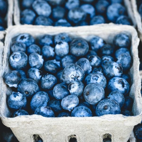 La photo représente un plan de près d'un casseau de bleuets. Il est possible d'en voir d'autres à l'entour.