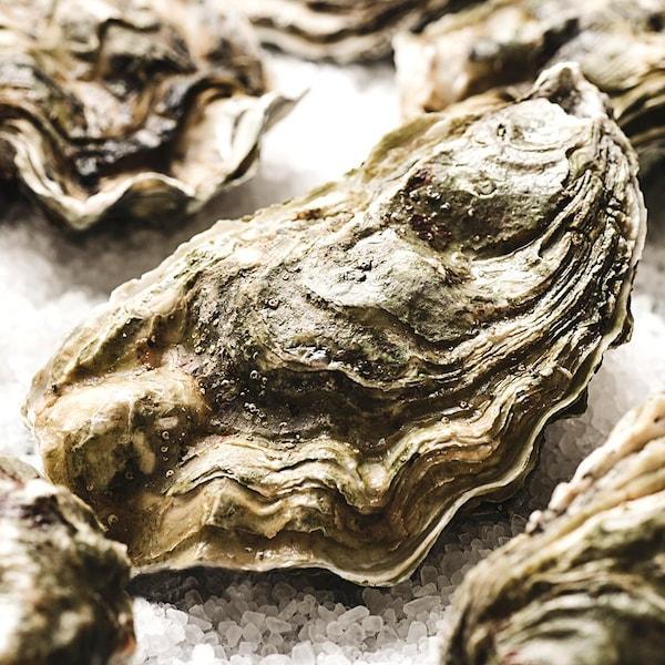 Zoom sur un étalage d'huîtres.