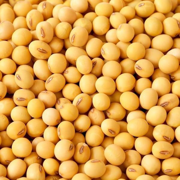 Plusieurs graines de soja.