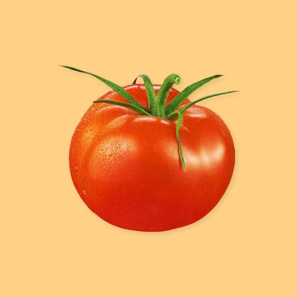 Une tomate sur un fond jaune.