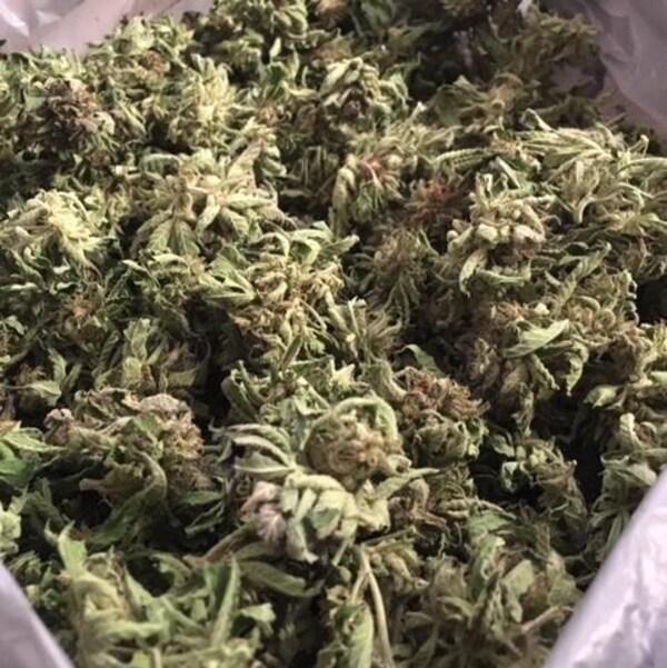 Les récoltes annuelles d'un producteur de cannabis
